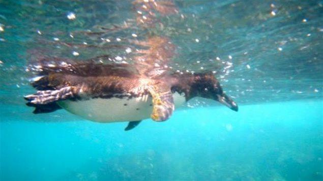 世界海洋日:10大濒临灭绝的海洋动物
